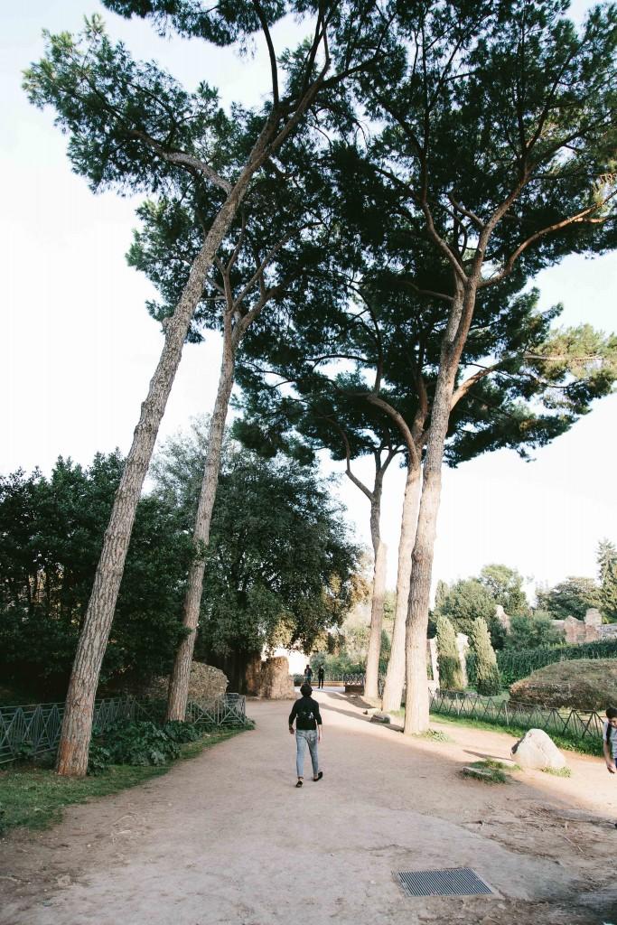 rome italy roman forum garden