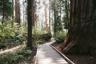 calaveras big trees state park