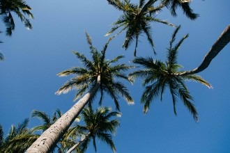 palm trees costa rica